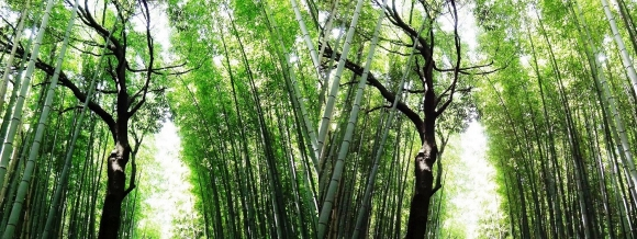 竹林の小径⑤(交差法)
