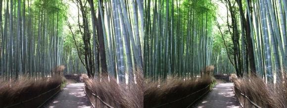 竹林の小径④(平行法)