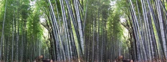 竹林の小径③(交差法)