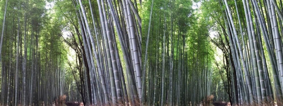 竹林の小径③(平行法)