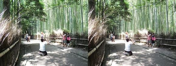 竹林の小径②(交差法)