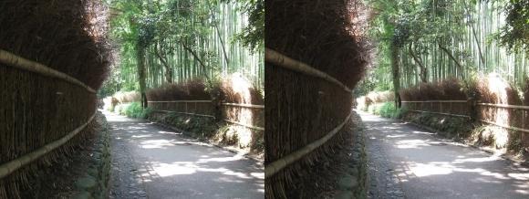 竹林の小径①(交差法)