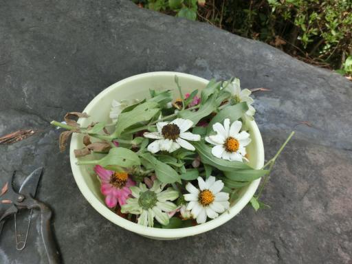 今日の庭仕事1