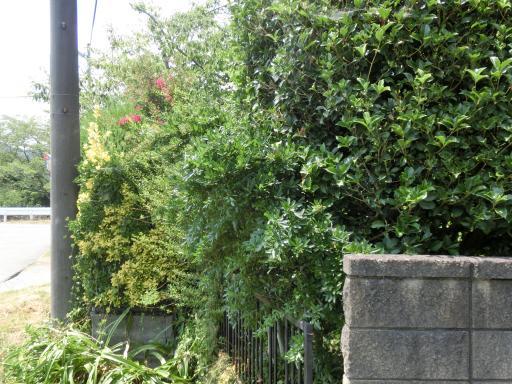 今日の庭仕事3
