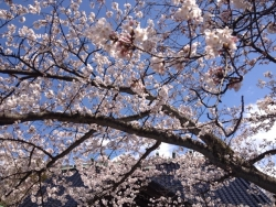 写真 2014-04-05 13 02 20