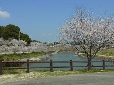 桜201401