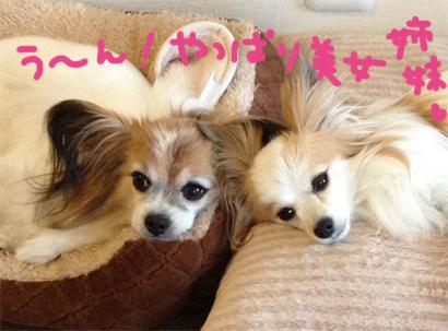 nanakoma20140526-1.jpg
