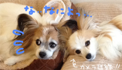 nanakoma20140526-2.jpg