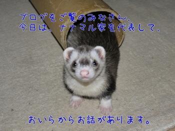ブログ③(1)