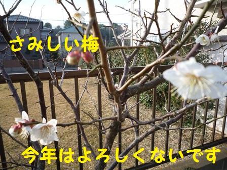 201403151051452fe.jpg