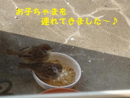20140520112753e1f.jpg