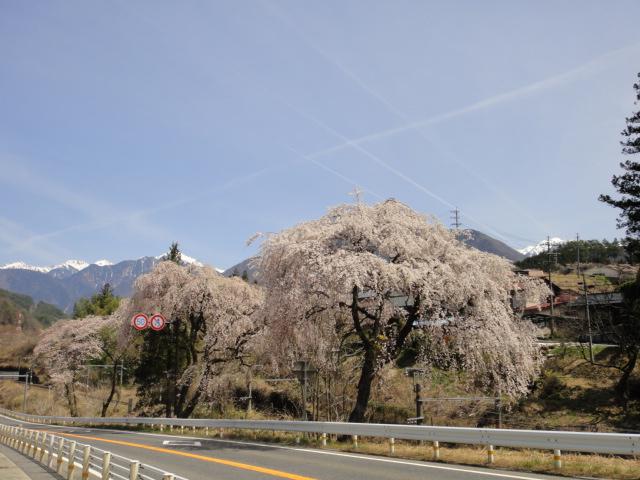 駒ヶ岳と桜