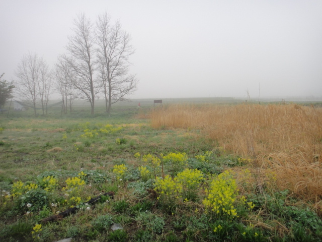 周りは朝霧1