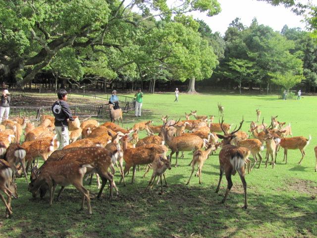 忍者屋敷 奈良公園2608 030