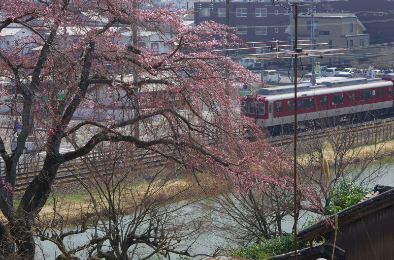 郡山城 桜1
