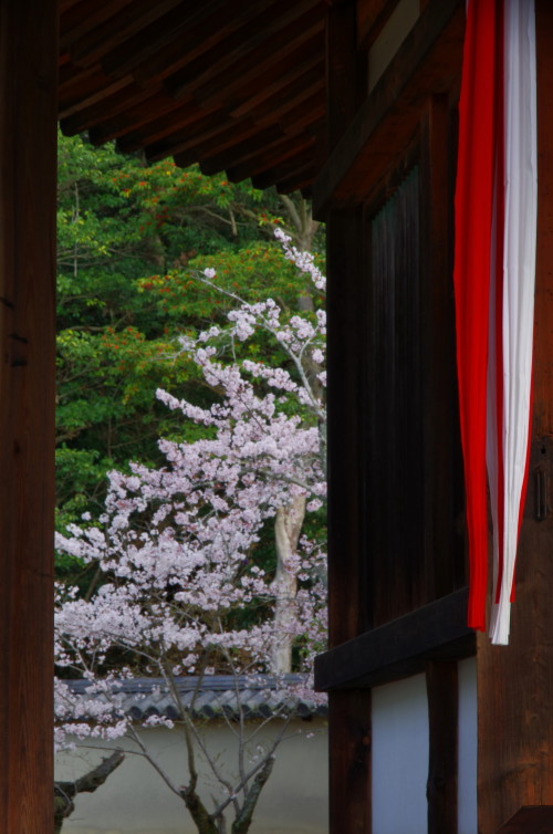 法隆寺 西円堂の桜