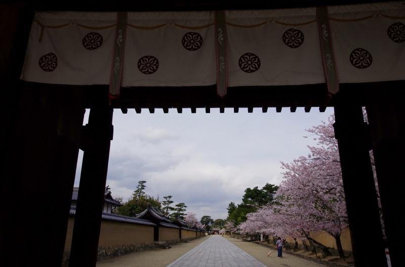 法隆寺 参道の桜1