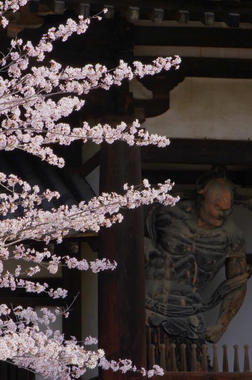 法隆寺 中門の桜