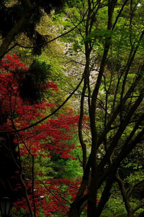 まつおでら 桜と椛と新緑