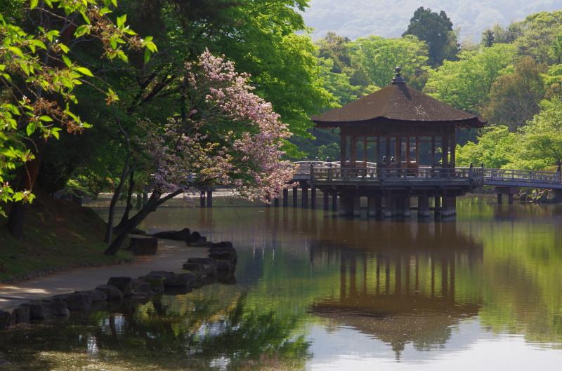 奈良の八重桜. 浮見堂