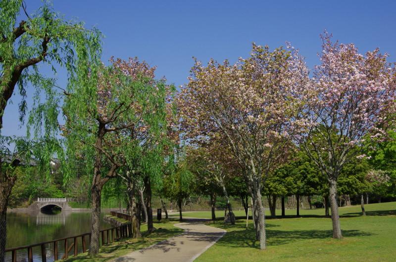 奈良の八重桜.鷺池