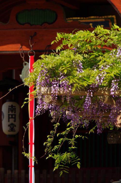 ふじ 興福寺1