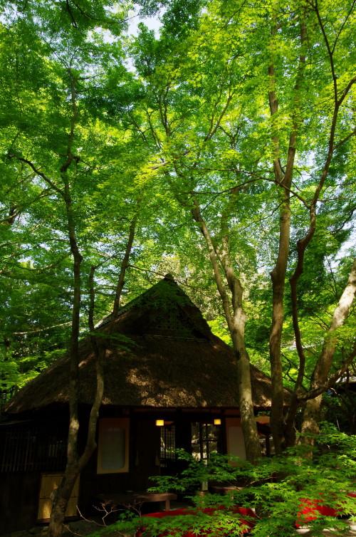 新緑 水谷茶屋1