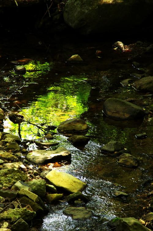 新緑 吉城川
