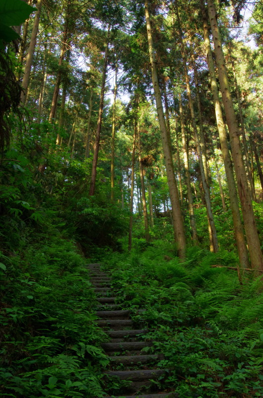 ふぐり山遊歩道1
