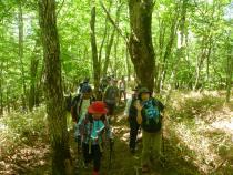 新緑登山(2)