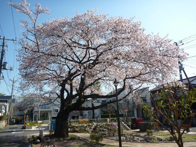 2014_sakura_0407_0.jpg