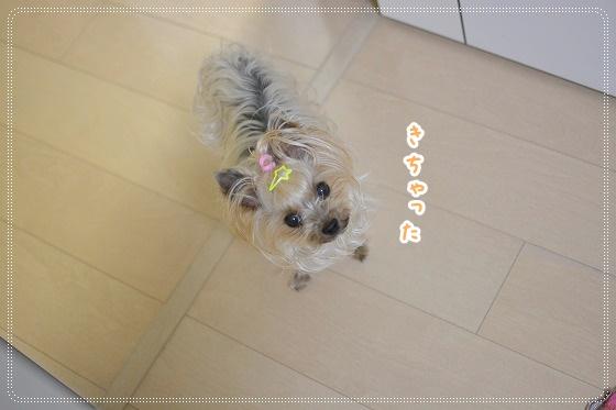 DSC_0060 (9)