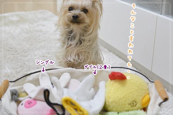 DSC_0035 (6)