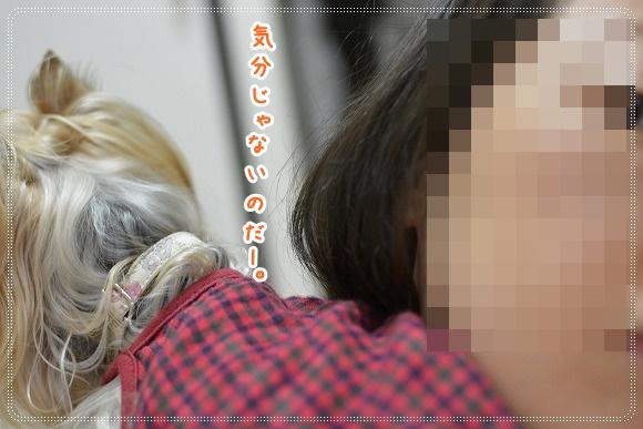 DSC_0059 (4)