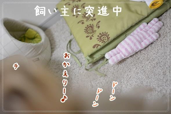 DSC_0011 (10)