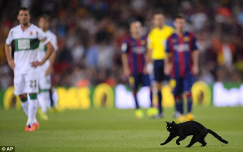 1408907967848_wps_2_A_cat_runs_on_the_pitch_d