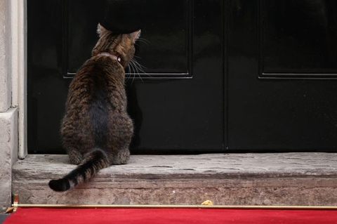 Freya-the-cat-owned-by-Chancellor-of-the-Exchequer-George-Osborne