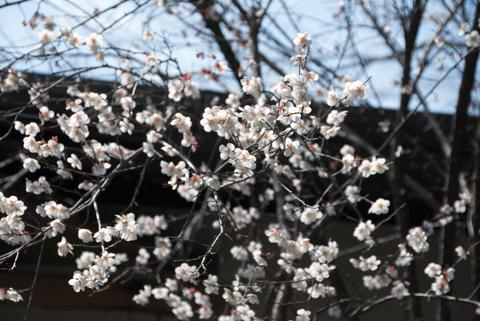 chichibu2_041414