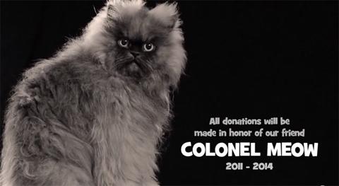 colonelmeow_071814