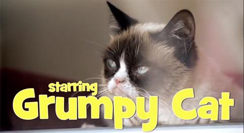 grumpycat_071814