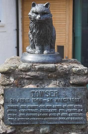 towsercat.