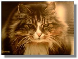 towsercat2