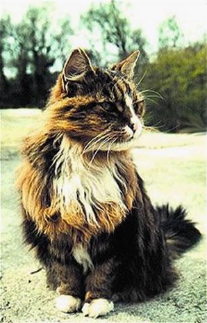 towsercat3