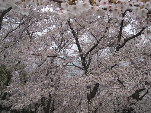 2014春☆播州赤穂