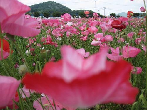 2014初夏☆笠岡ベイファーム