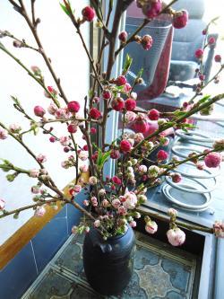 桃の花 済