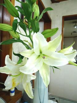 ユリの花 ●