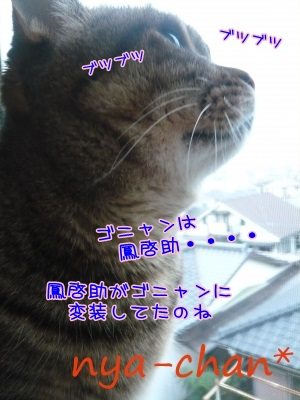 20131221193402e41s.jpg