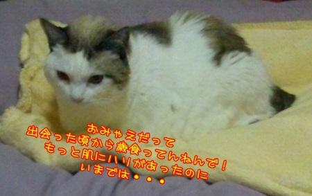 DSC_0231 (2)