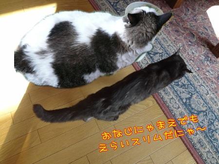 あんみつひめ家6